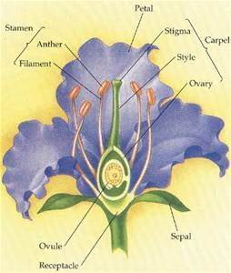 The Parts Of A Flower Labeled Parts Of A Flower Floral Education Flowers