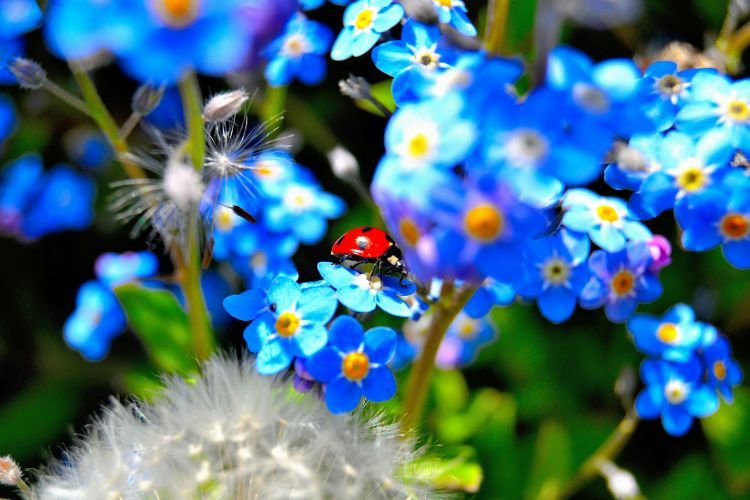 Fonds d 39 cran animaux fonds d 39 cran insectes coccinelles jardin du printemps par herbie77000 - Catalogue de fleurs gratuit ...