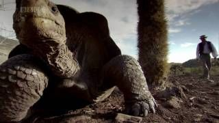 BBC GALAPAGOS Episode 2 Islands that Changed the World HD 720p PART 6 - YouTube