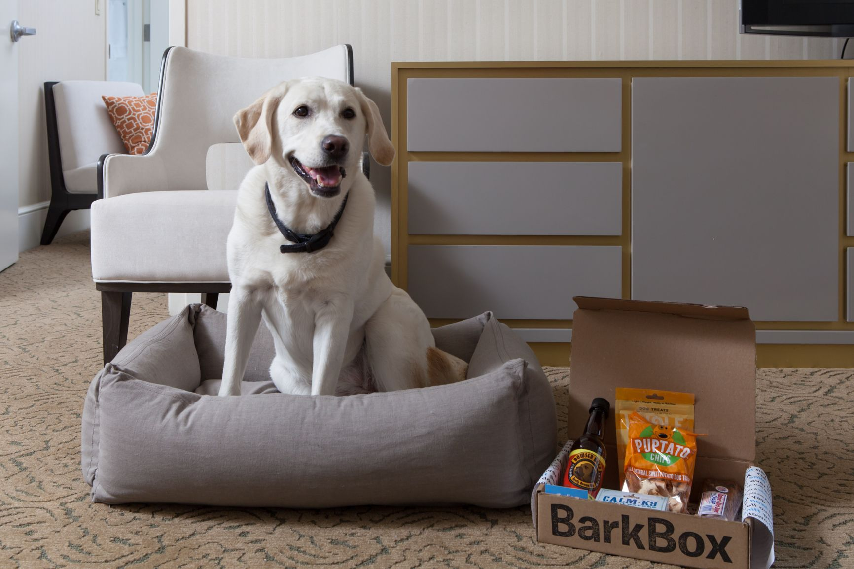 11 Hotels Where You and Your Pet Can be Pampered Together