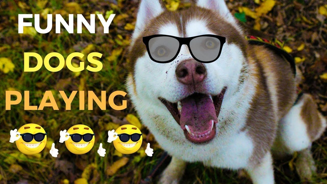 Cute & Funny Dogs Barking & Playing Part 2 Pets Fluffy