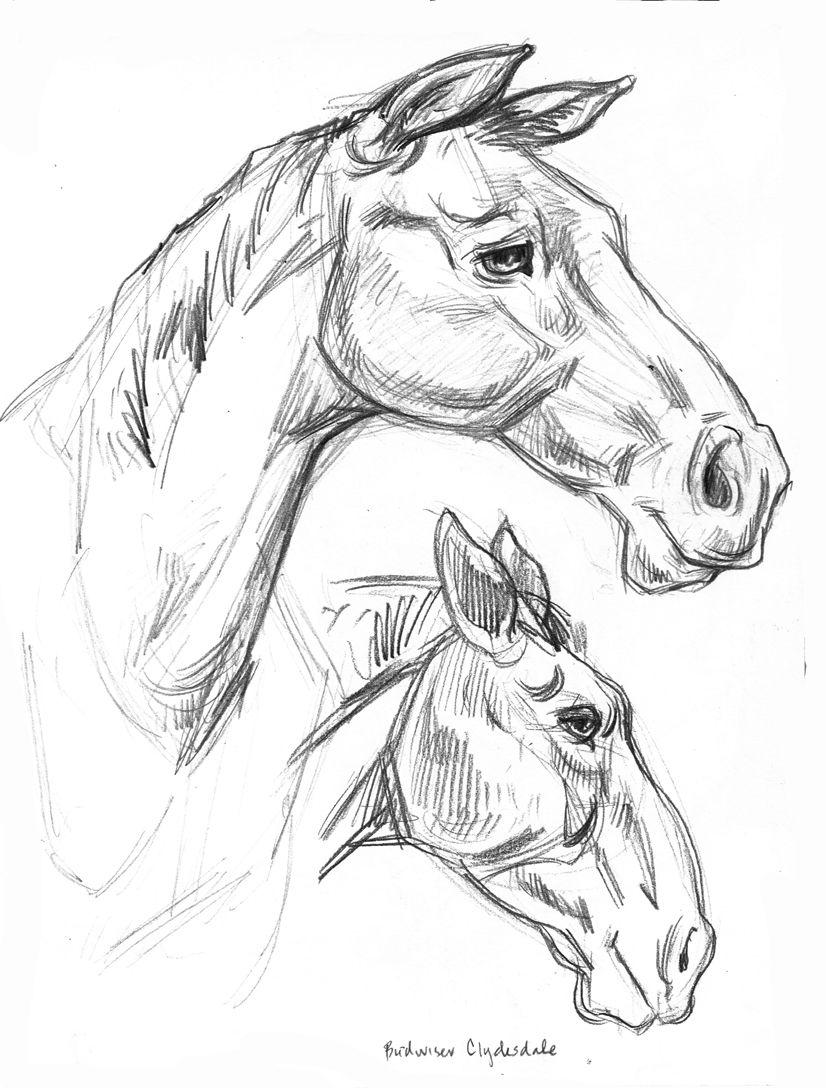 Pencil horse portraits from the county fair Gary Geraths