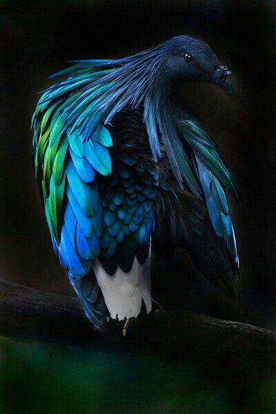 pin von 2pac shakur auf the winged ones  vögel als