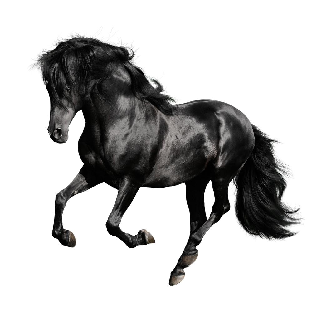 Black Horse Pura Raza Espanola Runs Black Horse Horses Black Horses