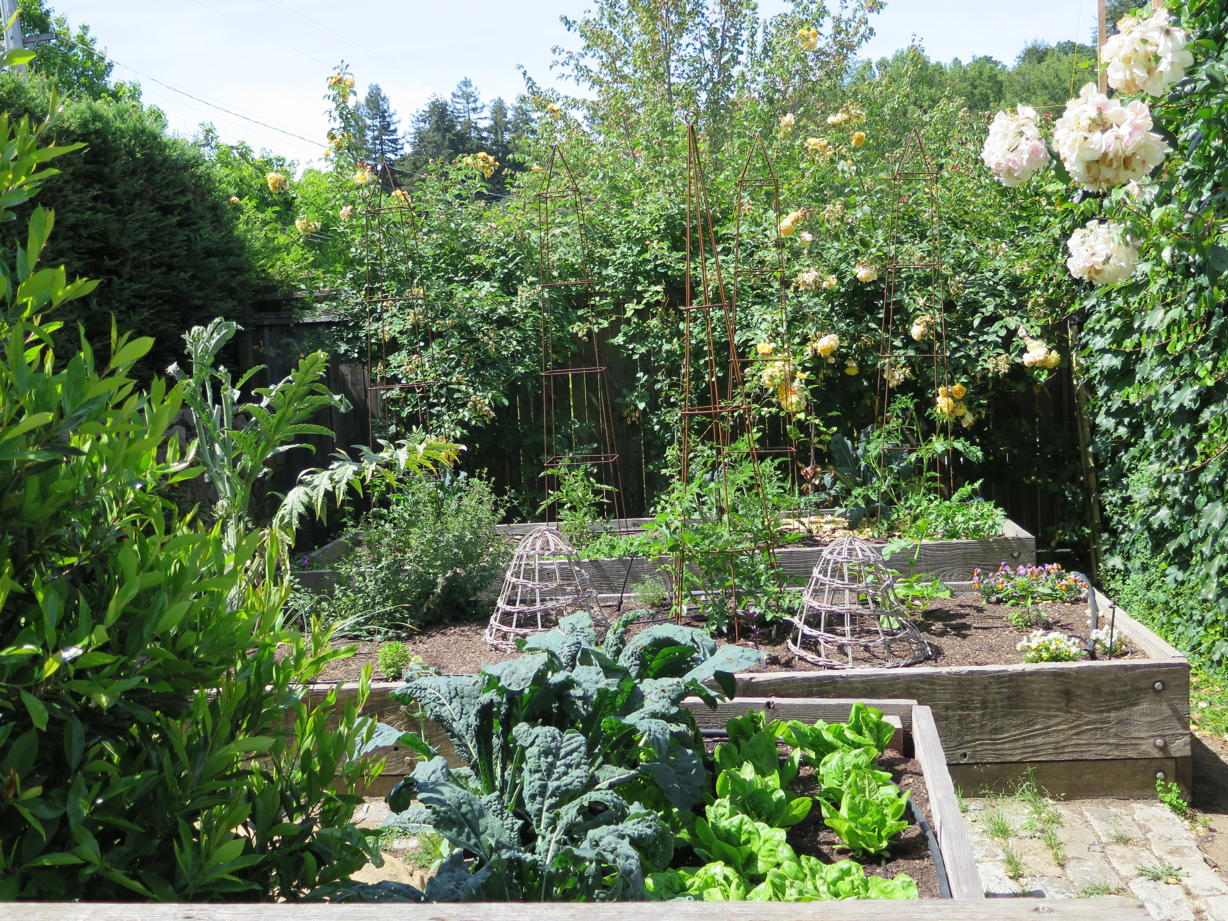 Raised Vegetable Beds In A Friends Vegetable Garden