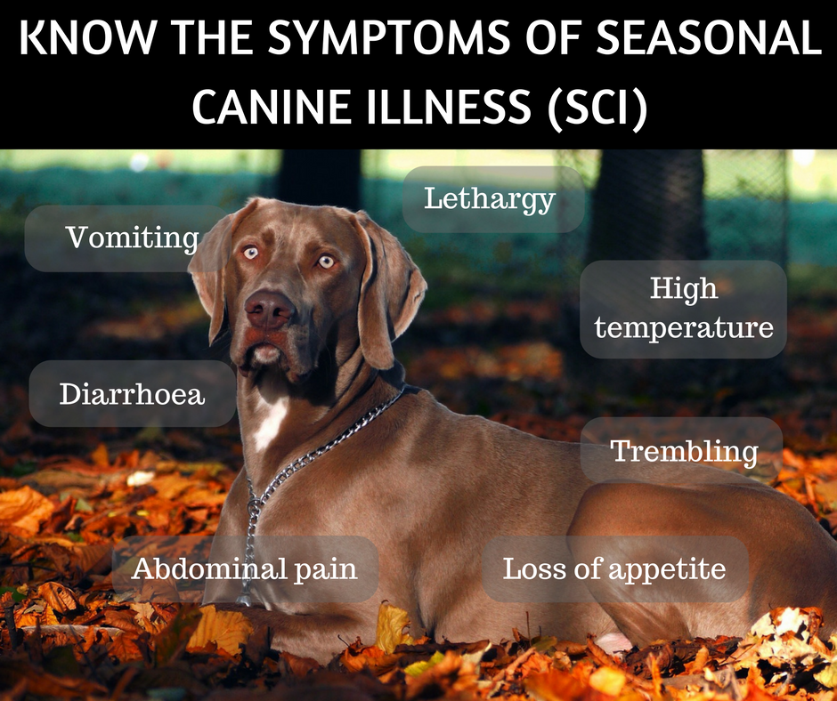 Sci The Mystery Autumn Illness Dogs Monthly Dogs Dog Health Dog Care