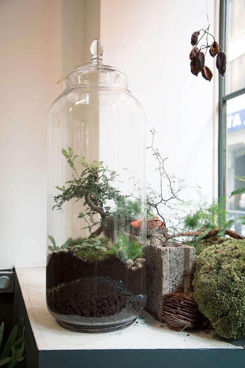 terrarium green factory d co terrarios plantas et. Black Bedroom Furniture Sets. Home Design Ideas