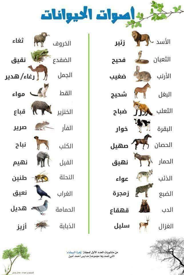 معجم الأصوات أكبر تجميعة سهلة لأصوات الحيوانات والطير Arabic Language Learn Arabic Online Learning Arabic