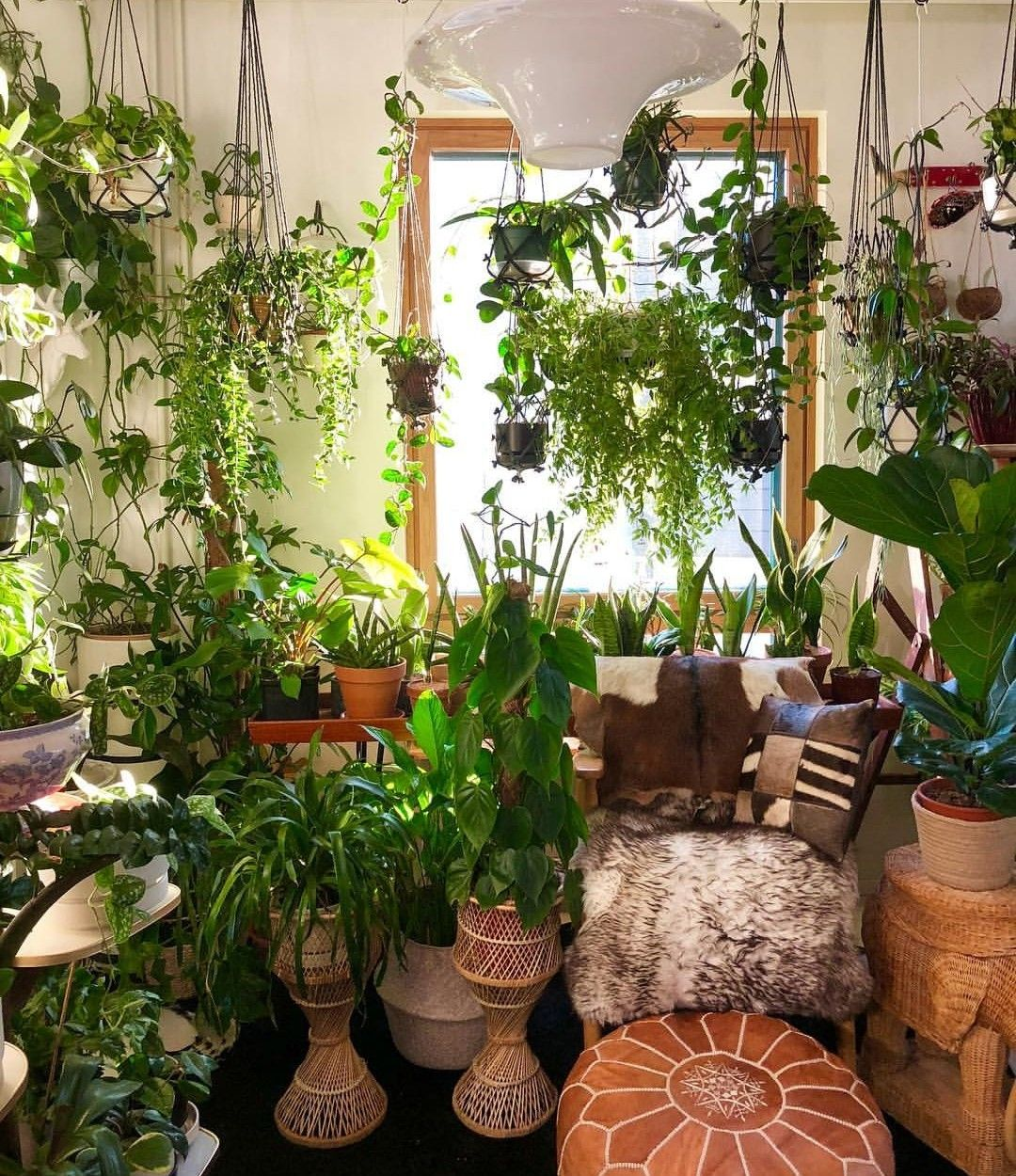 35 Indoor Garden Ideas To Green Your Home: Indoor Plants, Plants, Indoor