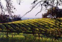 Optima Winery