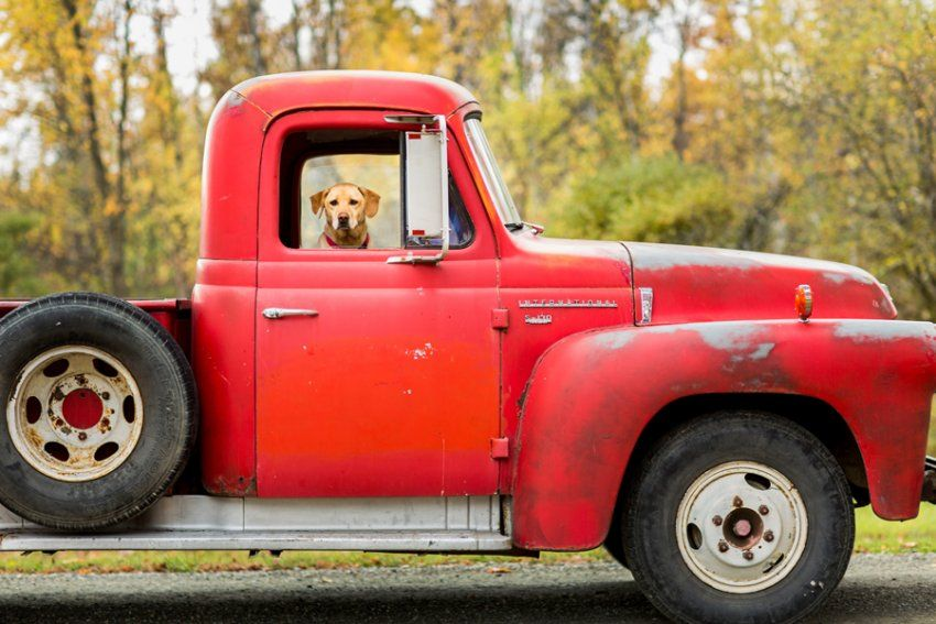 Saratoga Ny Family Photographer Truck Photo Shoot Vintage Pickup Trucks Vintage Car Photoshoot