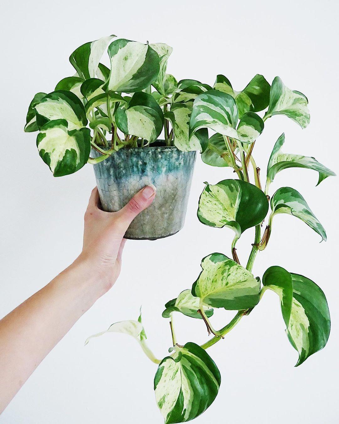 Epingle Par Lily Simplicity Sur Plantes D Interieur En 2020 Avec