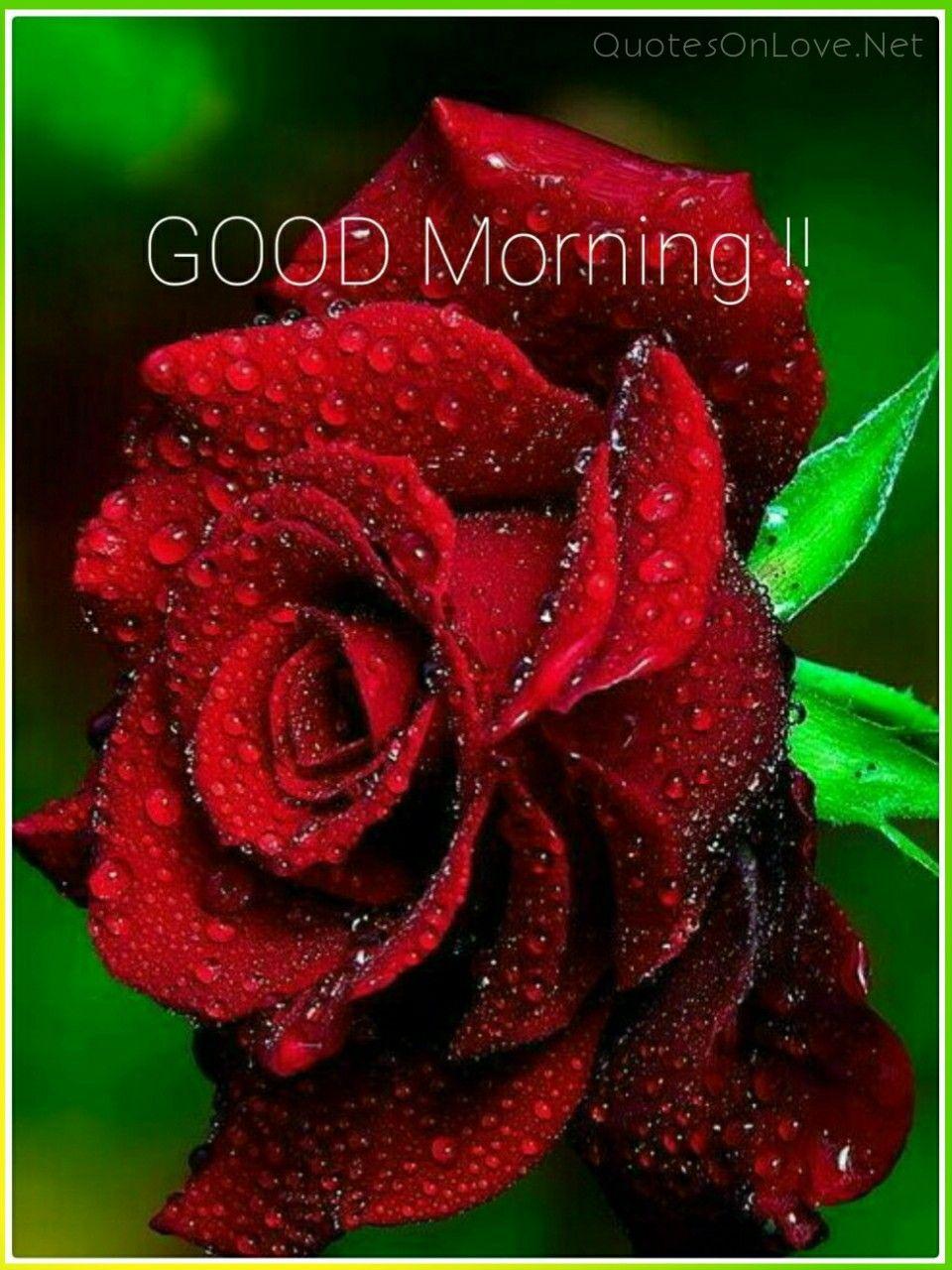 Good morning goodmorningimages goodmorningpics quotes