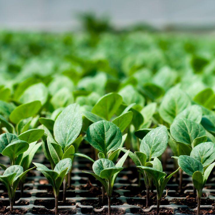 Organic farming benefits #organic #farming #benefits ...
