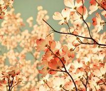 nature, paris, pink, tree (Full Size)