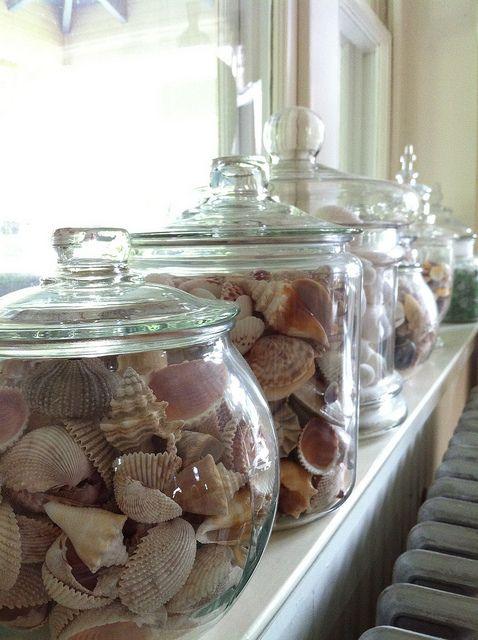 seashells In apothecaries