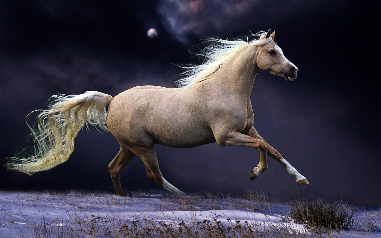 White running horses - photo#48