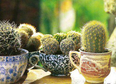 Arredare casa con le piante grasse cacti and gardens