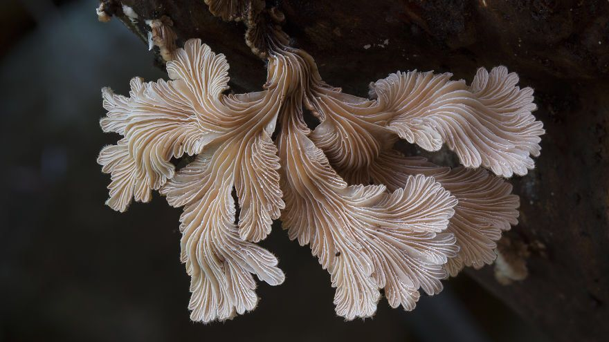 Intricate fungi by Steve Axford