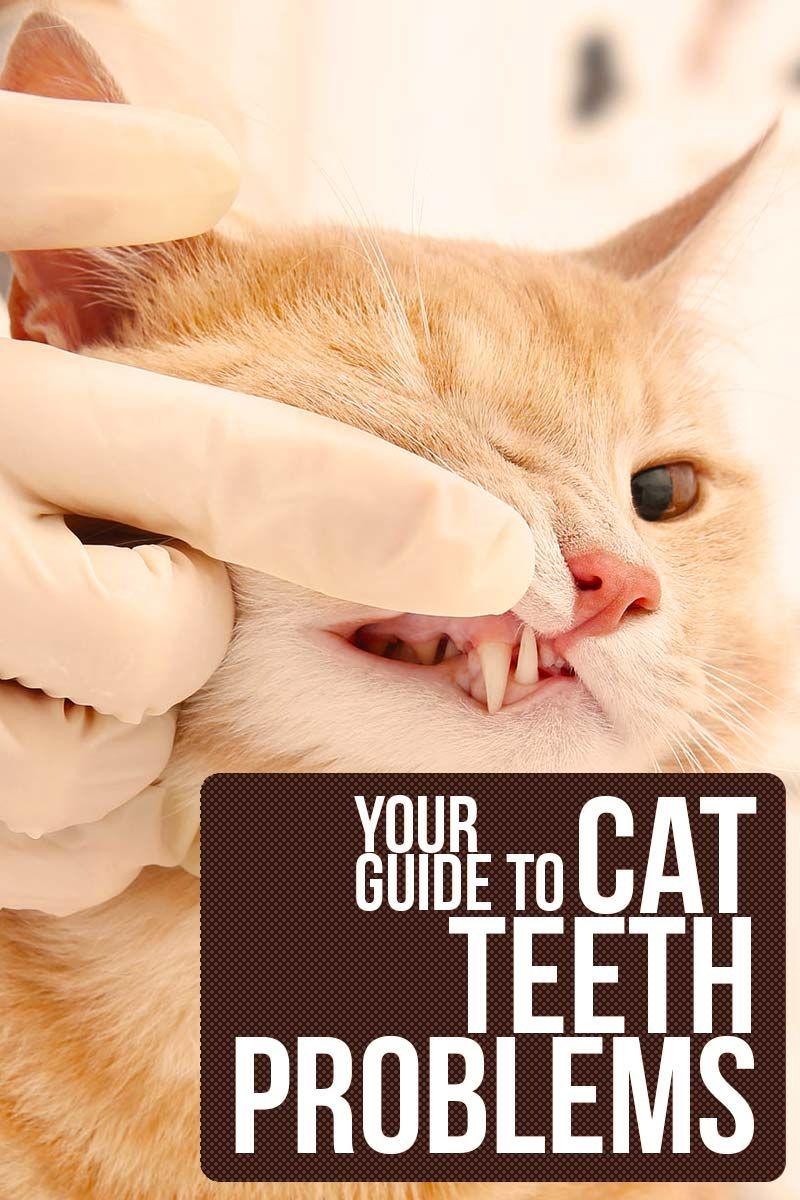 Cat Teeth Problems Cat health care, Cat health, Sick cat