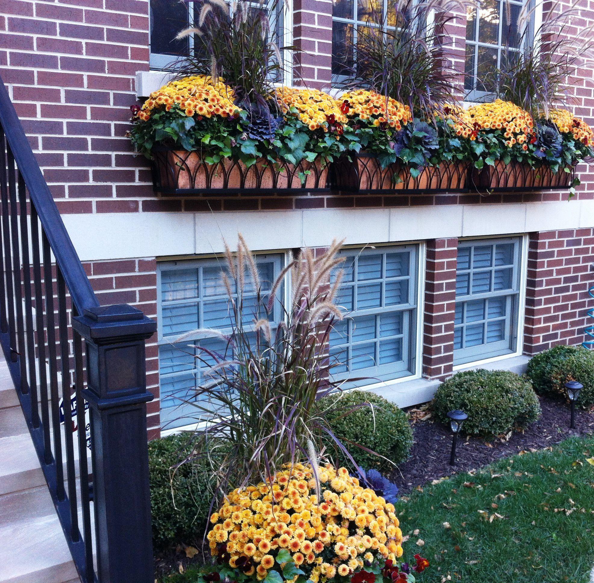 Fall Window Box: COLOR COMBO.... Fall Mums/window Box Ideas