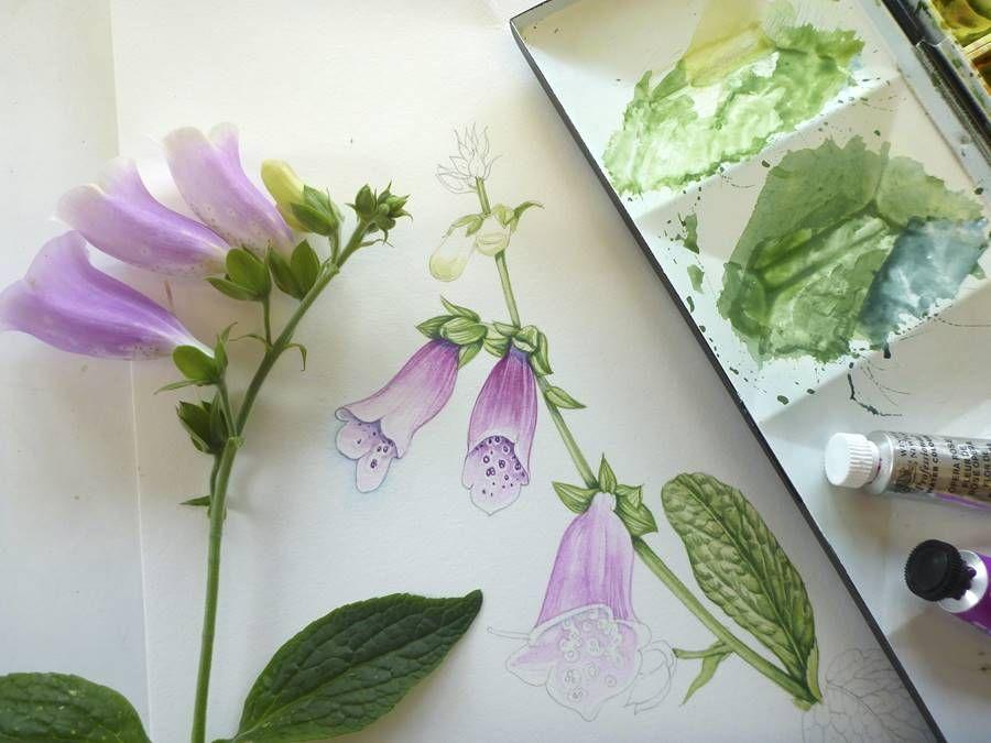 Botanical Artists Review Stonehenge Aqua Hotpress Paper Flower