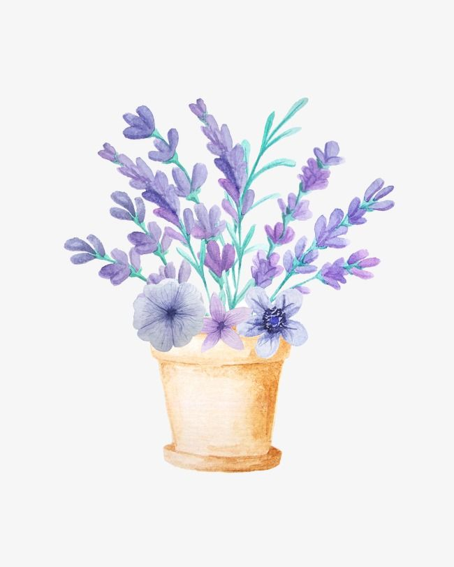 Beautiful Lavender Lavender Purple Flower Png Transparent Clipart Image And Psd File For Free Download Free Watercolor Flowers Flower Png Images Watercolor Flowers