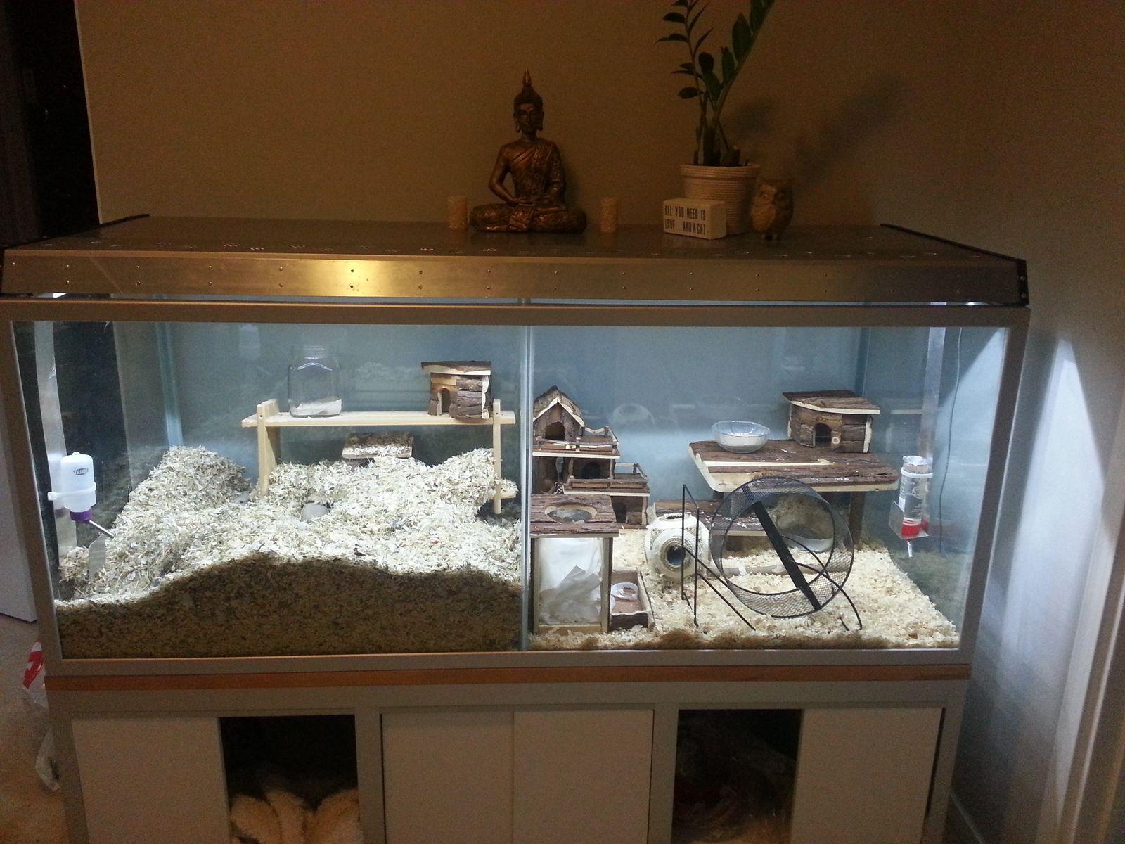 Hamsterbur inredning s k p google hamster pinterest for Fish tank for hamster