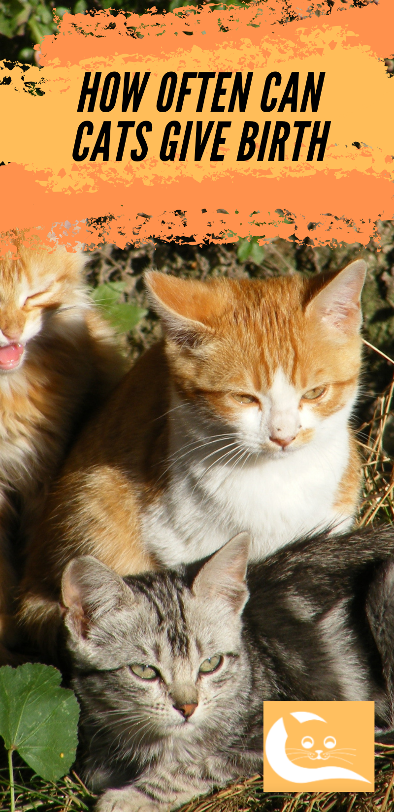 How Often Can Cats Give Birth Cat Care Cat Birth Healthy Cat