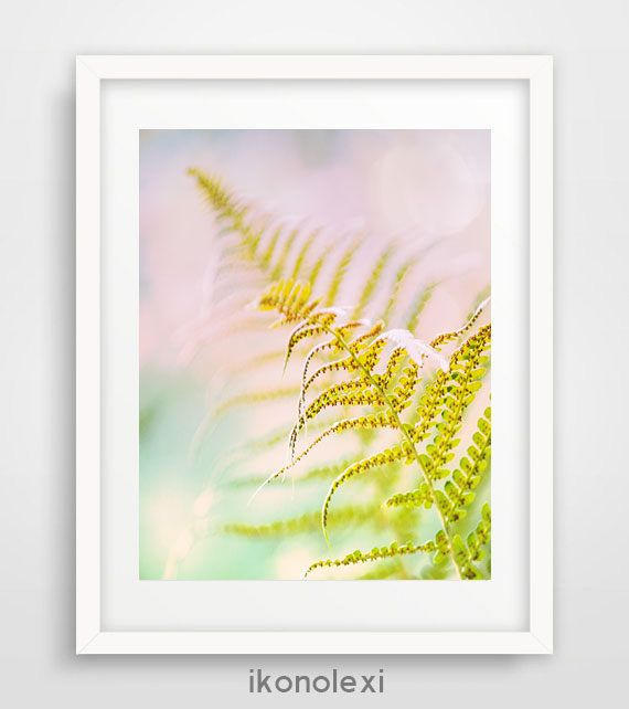 Fern plant, wall prints, nature photography, photo art, spring ...