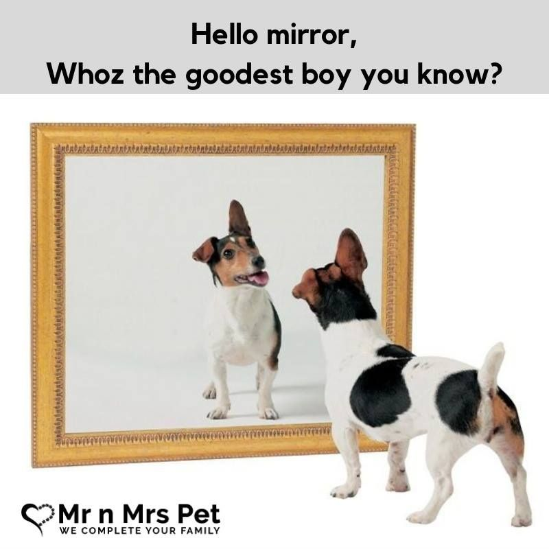 Any guesses what the mirror would say? 😛 funny meme