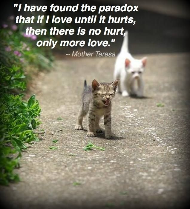 Angels Among Us, Inc fb Cute cats, Kittens cutest, Cute