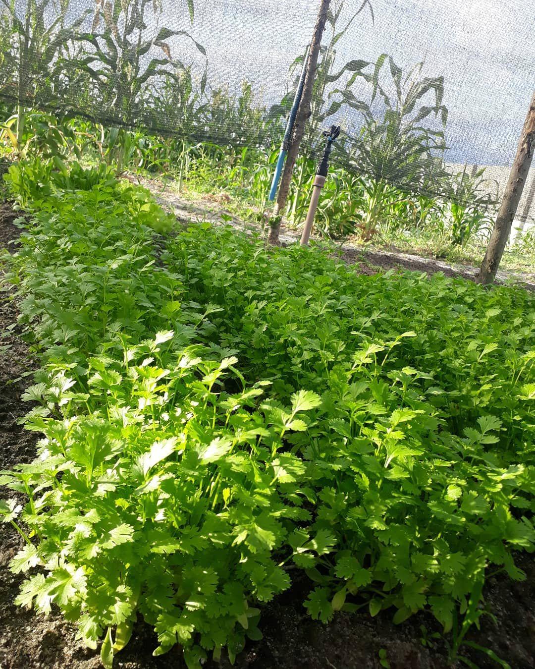 Clique na IMAGEM e aprenda a cultivar sua própria horta orgânica do absoluto ZERO.