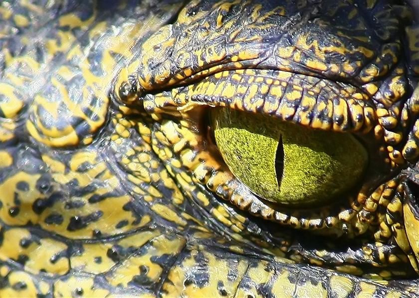 Close Up Pictures Of Dinosaurs Google Search Dinosaurs And - 24 detailed close ups of animal eyes