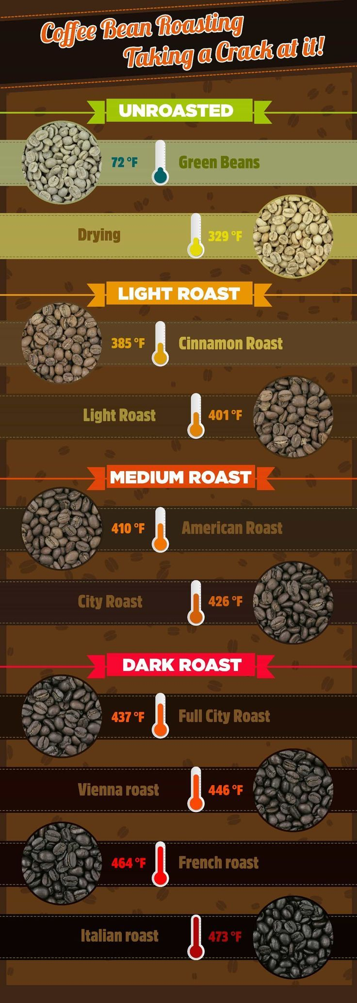 Coffee Bean Roasting Infographic Unroasted Light Medium Dark