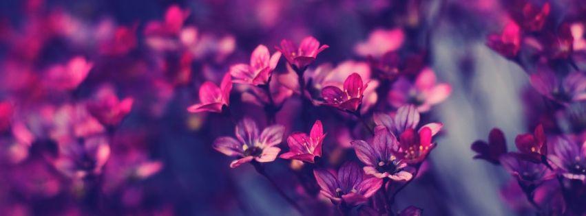 Znalezione Obrazy Dla Zapytania Tapety Na Fb Purple Flowers Wallpaper Flower Wallpaper Flower Backgrounds