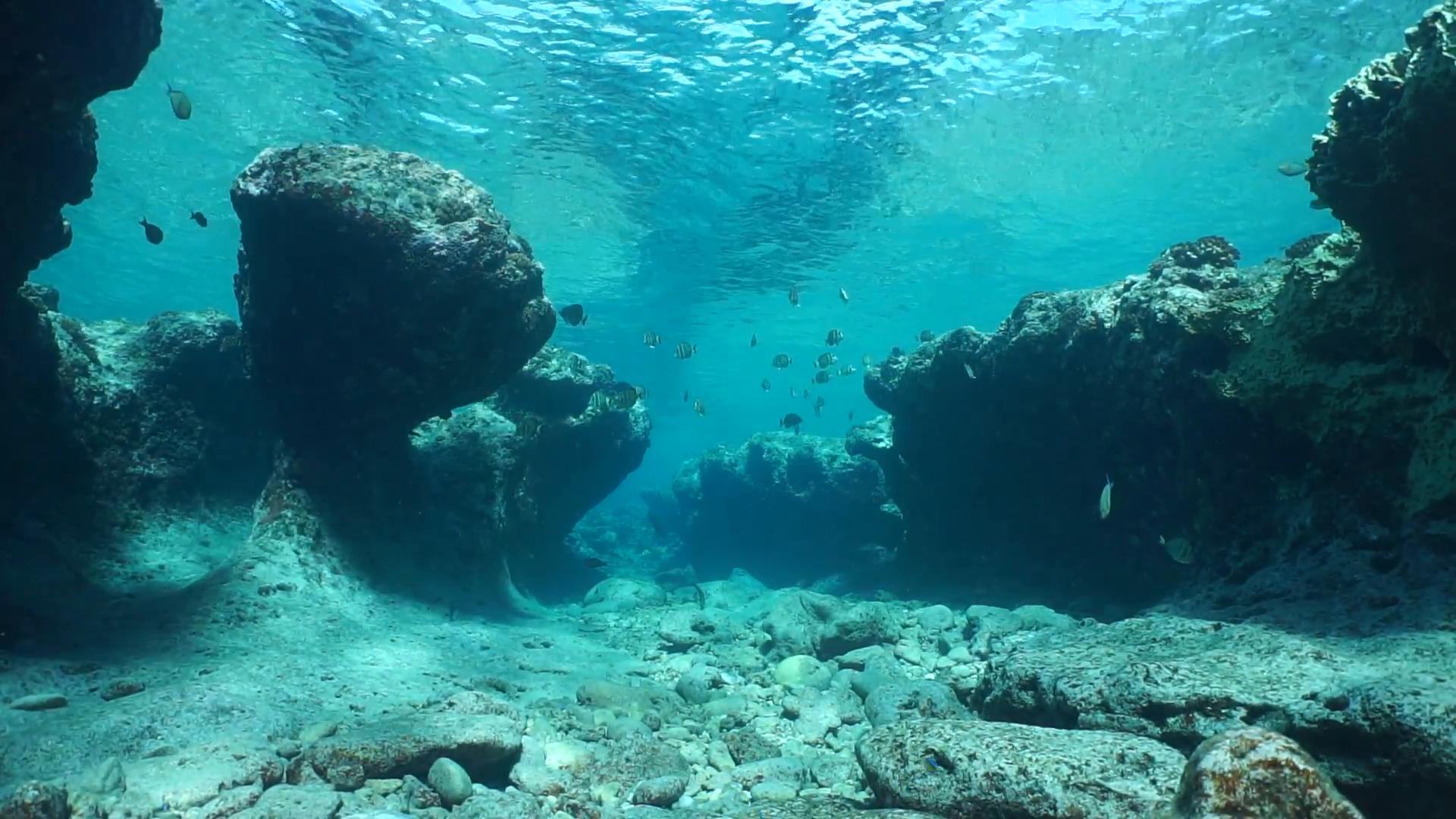 Underwater Landscape Ocean Pictures Ocean Pictures To Paint