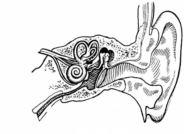 Human Anatomy Ear Coloring Pages Bulk Color Coloring
