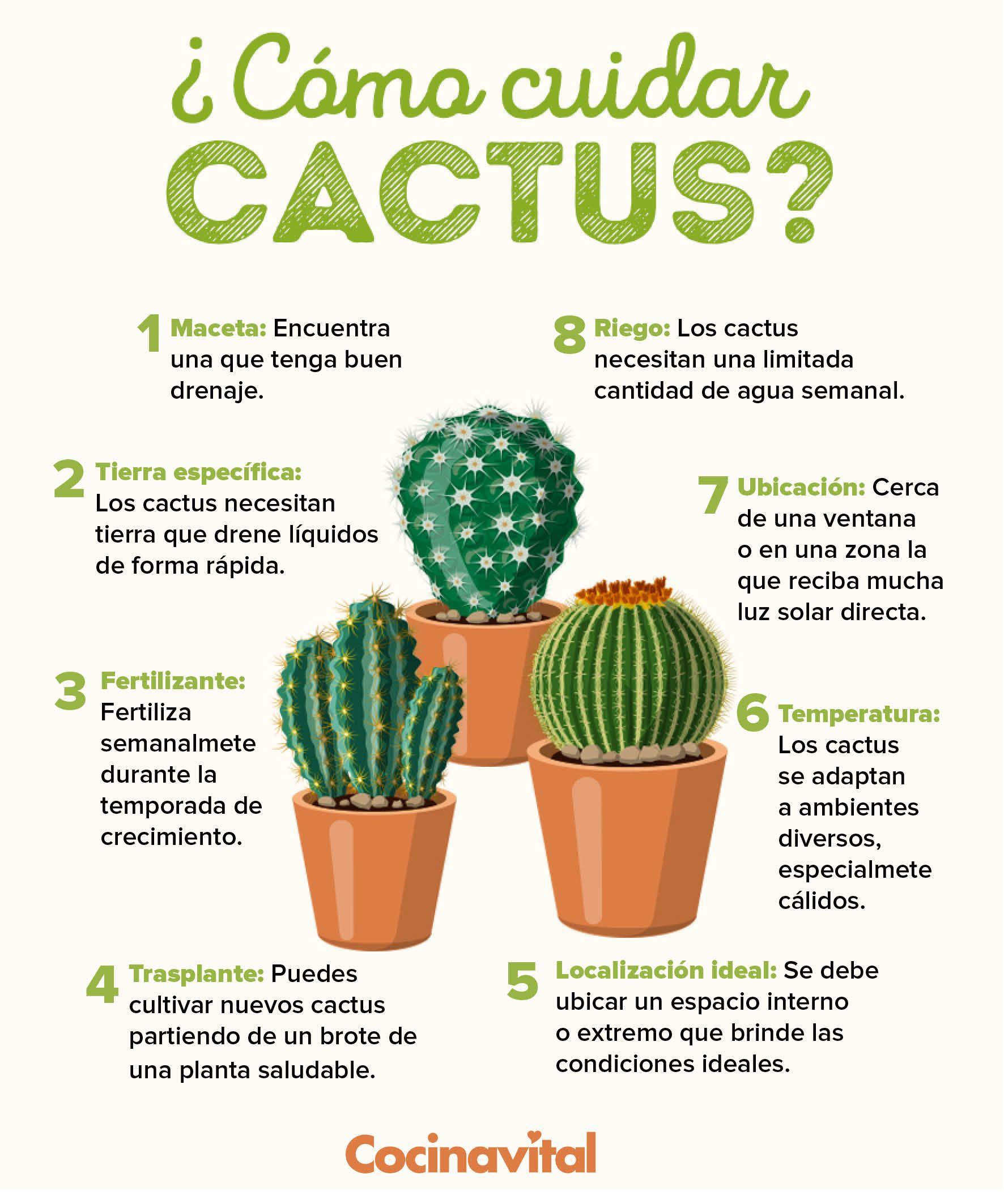 Plantas De Cactus Cuidados