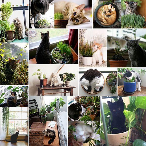 Feline Friendly Houseplants Cat Friendly Plants Indoor Plants Pet Friendly Plants