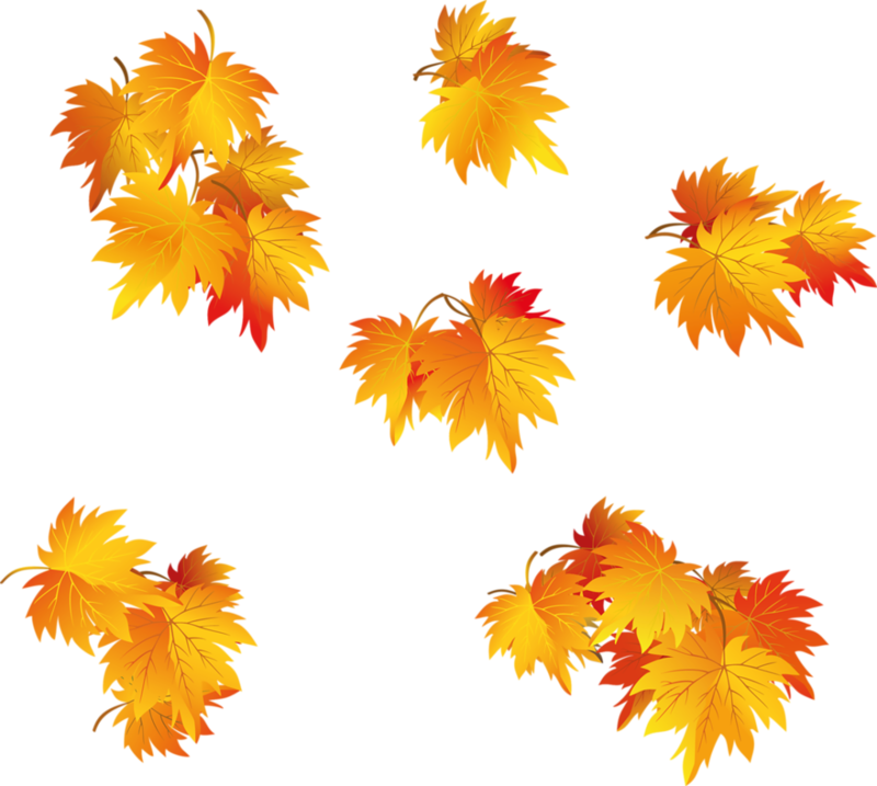 Картинки осенних листьев на прозрачном фоне