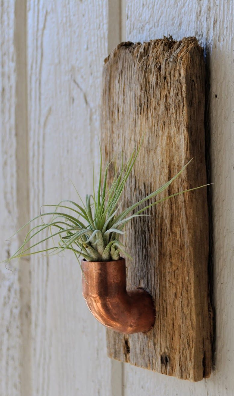 Air Plant Wall Holder Botanicalware Air Plant Wall Holder Rustic Industrial Home