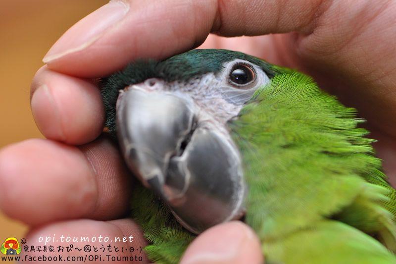 lovely #bird
