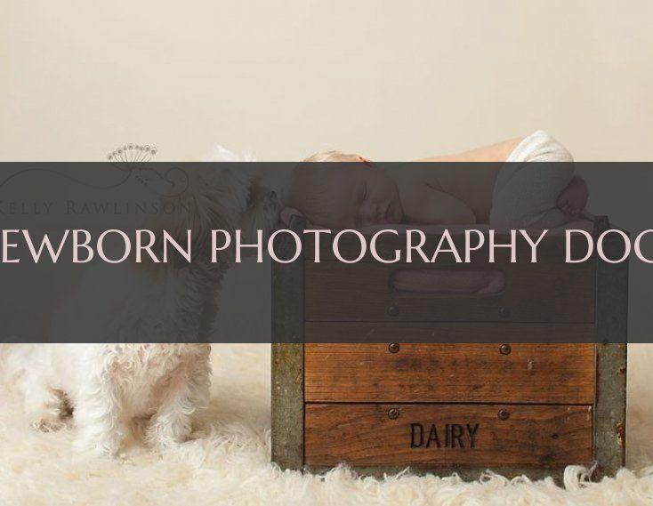 neugeborene fotografie hunde & newborn photography dogs