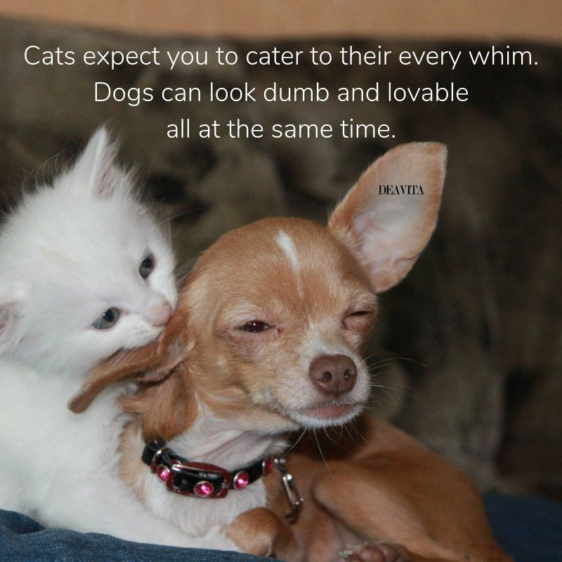 Cats Vs Dogs Funny Pet Quotes Cats Dogs Funny Pets Quotes Cat Vs Dog Dog Quotes Dogs