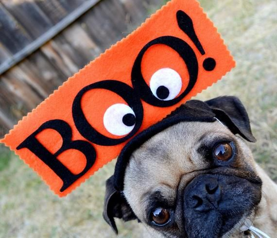 Dog Costume Boo Hat For All Size Pets Guaranteed Delivery