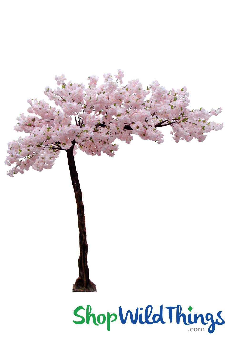 Coming Soon Flowering Cherry Blossom Multi Pink 10 5 Feet Tall X 8 Feet Wide Sideswept Create Arch Using 2 Flowering Trees Pink Flowering Trees Pink Dogwood