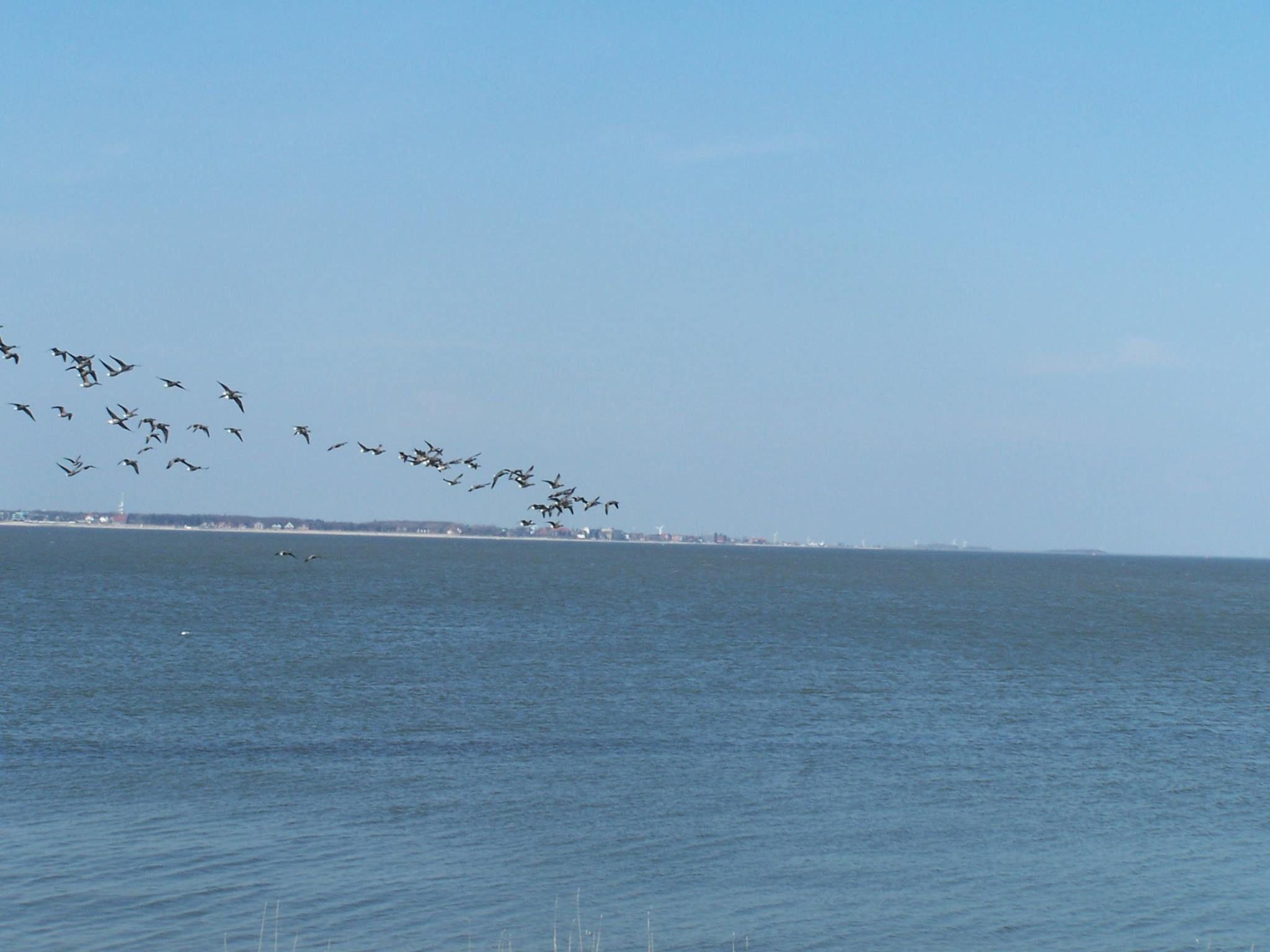 Hallig Langeness - der perfekte Rückzugsort vom Altag...  #urlaub #meer #nordsee #germany #halligen