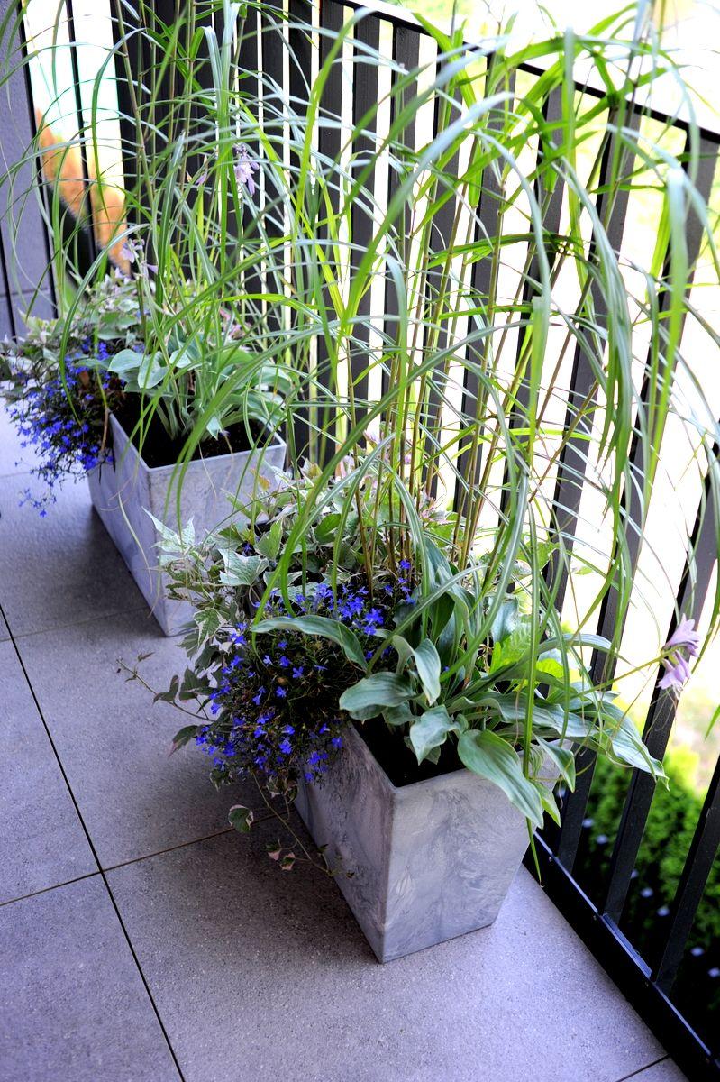 Ogrod Lobzow Ogrod Lobzow Plants Doms