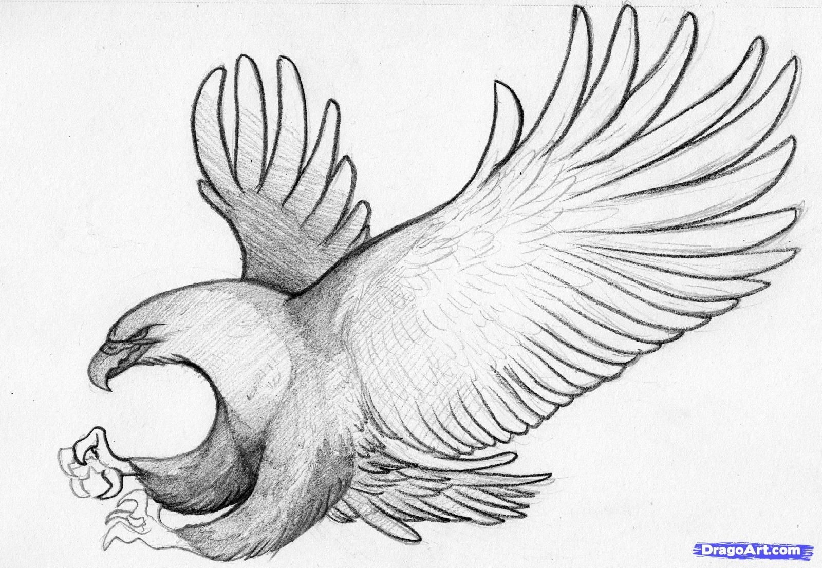 Easy pencil sketches how to sketch an eagle in pencil draw an eagle bird step 8